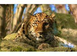 动物,豹(动物)226899