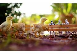 动物,鸡,克隆人士兵,鸟类,星球大战,幽默102021