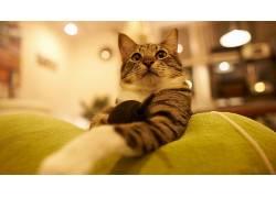 动物,猫,特写137458