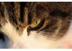 动物,猫,特写180351