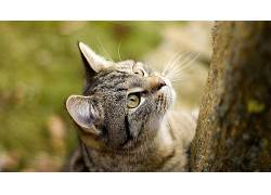 动物,猫,特写194547