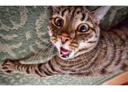 动物,猫,特写195275