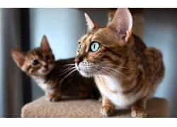 动物,猫,特写201799
