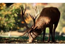 动物,鹿,鹿角,阳光180380