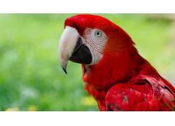 动物,金刚鹦鹉,性质,特写,鸟类,鹦鹉202352
