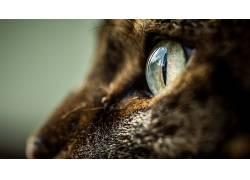 动物,猫,眼睛137416