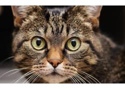 动物,猫,眼睛22752
