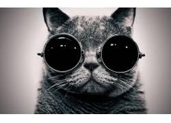 动物,猫,眼镜,单色,黑色10789