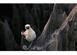 动物,石头,森林,狐猴,白色,马达加斯加,性质,景深,黄眼睛170712