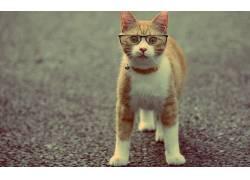 动物,猫,眼镜194463
