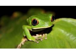 动物,青蛙,两栖动物137228