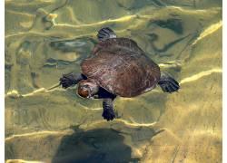 动物,龟,水173306
