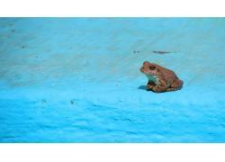 动物,青蛙,两栖动物217614