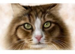 动物,猫,绿眼睛,看着观众360581