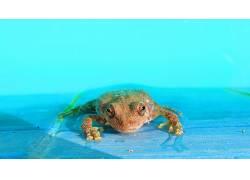 动物,青蛙,两栖动物217615