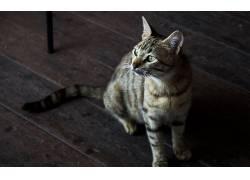 动物,猫,绿眼睛267229