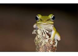 动物,青蛙,模糊,两栖动物98640
