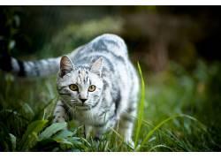 动物,猫,草,景深20633