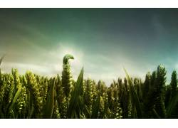 动物,绿色,景深,照片处理,爬行动物,壁虎,植物6458