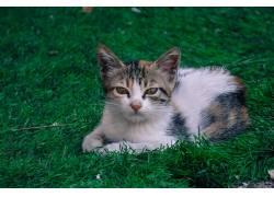 动物,猫,草118671