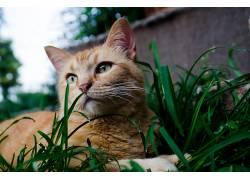 动物,猫,草139531