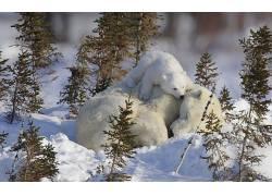 北极熊,动物,小动物,雪4081