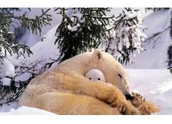 北极熊,动物,小动物,雪4104