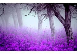 花卉,树木,薄雾,壁纸244016