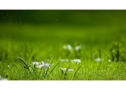草,花卉,宏,植物36652图片