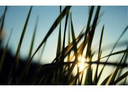 草,阳光,宏,植物26410图片