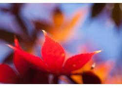 宏,树叶,壁纸,植物101239图片