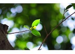 宏,树叶,植物,科,背景虚化21392图片