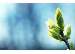 宏,树叶,植物57199图片