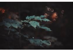 宏,植物,壁纸,树叶,背景虚化430352图片