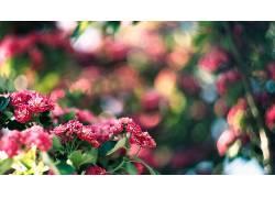 背景虚化,花卉,壁纸,景深,植物100046图片