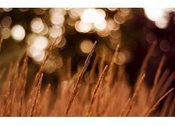 背景虚化,草,景深,植物11168图片