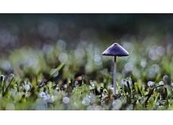 背景虚化,蘑菇,草,壁纸,宏,植物2882图片