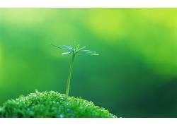 宏,草,植物,绿色背景,树叶57291图片