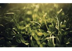 宏,草,植物50270图片