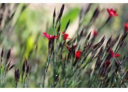 花卉,植物,宏422631