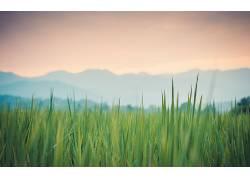 过滤,壁纸,草,植物,天空98468图片