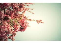 花卉,天空,粉,植物56795图片