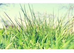宏,植物,草41487图片