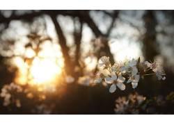 花卉,白花,阳光,景深,壁纸,背景虚化26429