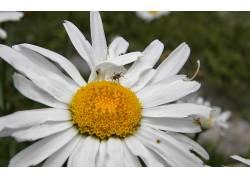 花卉,蚂蚁,壁纸240592
