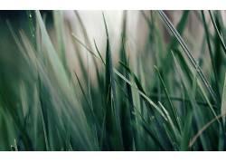 壁纸,草,宏,植物3225图片