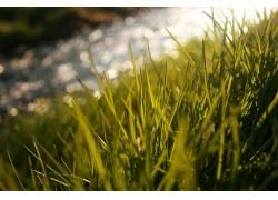 壁纸,草,宏,植物3230图片