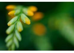 宏,植物121777图片