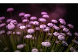 花卉,植物,背景虚化22380