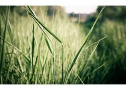 壁纸,草,植物52478图片